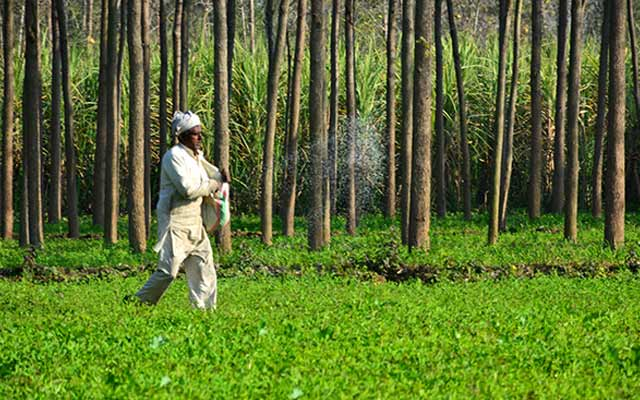agriculture-by-shah-junaid-(4)